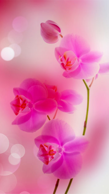 Spring Flowers Wallpapers for Iphone 1.