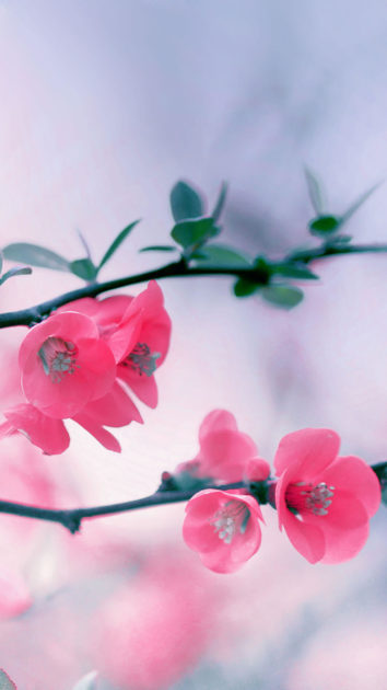 Spring Wallpapers for Iphone 2.